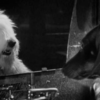 The Shaggy Dog   (1959)